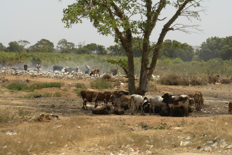 Tiere und Menschen in der Landschaft
